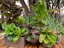 Yes, you can have a tropical-feeling garden in Alberta